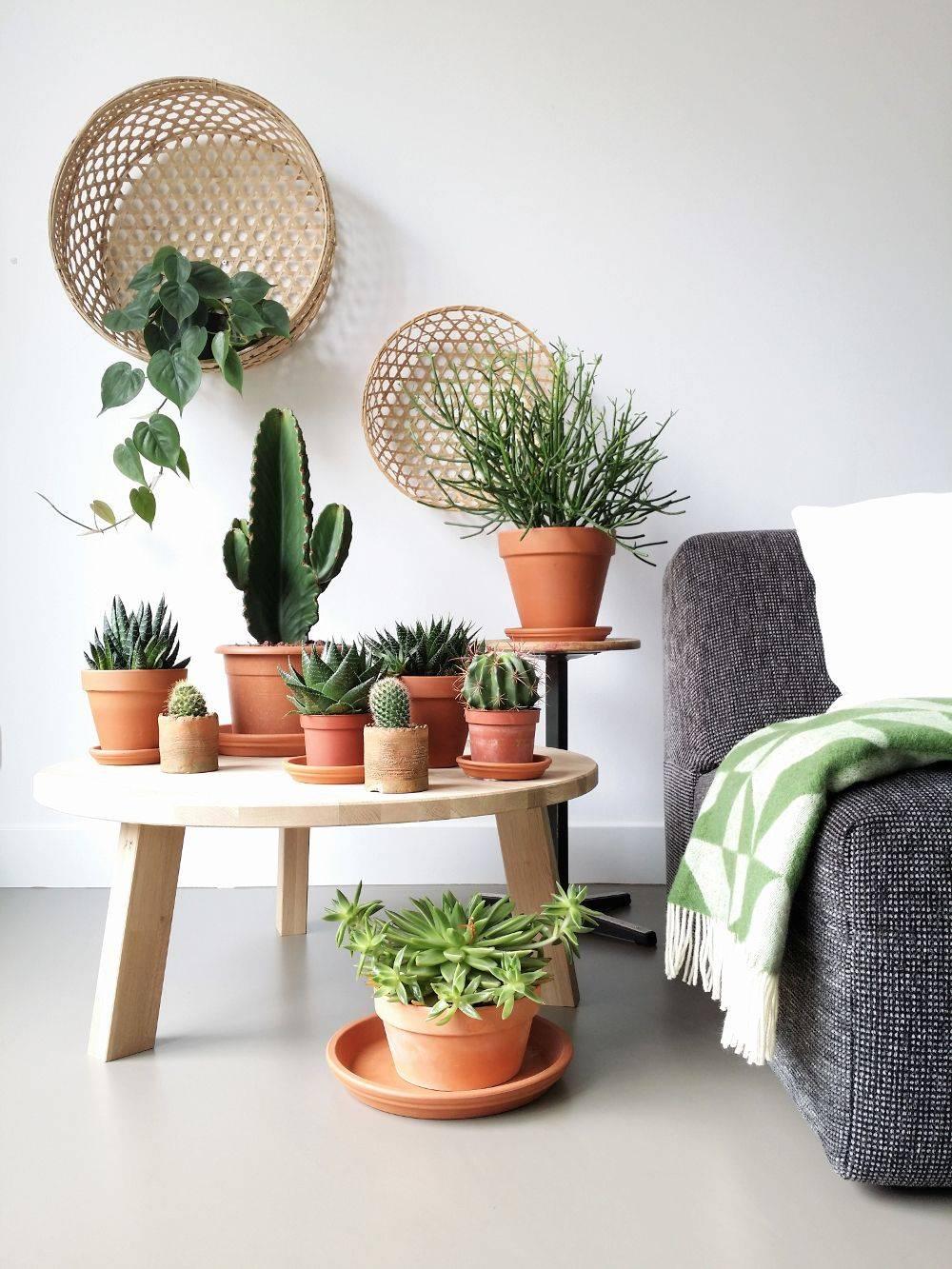 cactussen-zonlicht-femfem